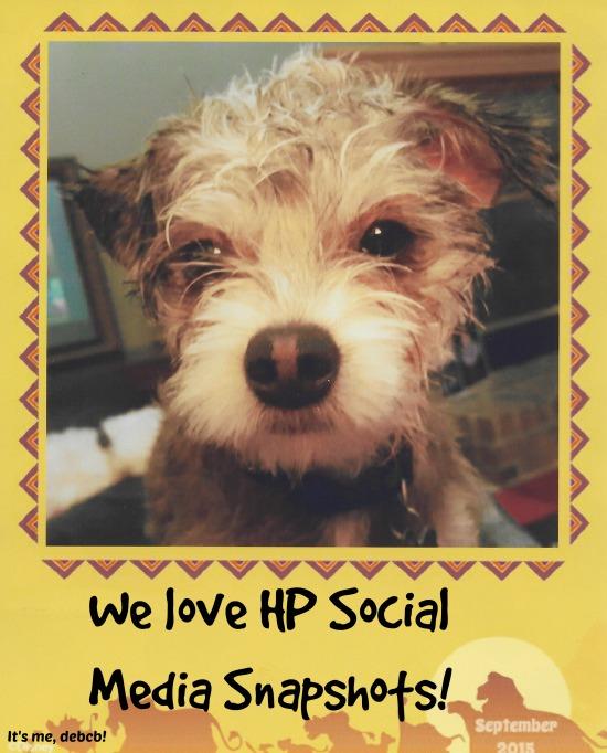 We-love-HP-Social-Media-Snapshots